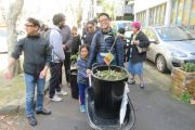 Donating Apple trees to the City of Auckland